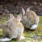 ウサギの背中